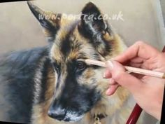 Portrait Drawing Speed Painting - Dog in Pastels - German Shepherd Videos 4 Share - German Shepherd Painting, German Shepherd Dogs, King Shepherd, Animal Paintings, Animal Drawings, Colored Pencil Techniques, Pastel Art, Wildlife Art, Dog Art
