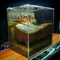 Good Cost-Free tarantula enclosure Popular Acceptable, therefore we all believe lions get terrible press. The marketing is definitely painting them lions out to b Decor Terrarium, Terrarium Jar, Terrarium Reptile, Aquarium Terrarium, Garden Terrarium, Planted Aquarium, Tarantula Enclosure, Snake Enclosure, Reptile Room