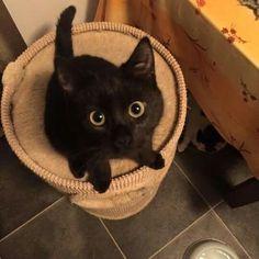 black cat...those eyes