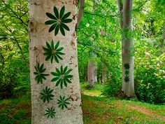 Land Art English | Creations in Nature. Darnaway-1- Dietmar Voorwold