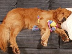 10 Things You Understand When You Have A Lazy Dog http://www.thatscoop.com/queenkapasi/things-you-understand-if-you-have-a-lazy-dog/list