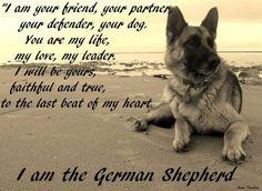 I am the German Shepherd