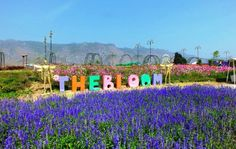 The Bloom by TV Pool http://goo.gl/RqUqS