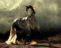 Dreamlike beauty - Arabian and Andalusian horses. Page 1