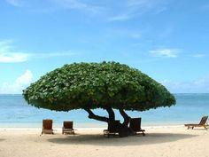 One Foot Island: The Beach at Etu Moana, AItutaki, Cook Islands
