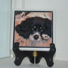 Cocker Spaniel  display plaque - or coaster with High Gloss Resin Finish - with cork backing, Can Custom make with your pet! by atlanticbeach on Etsy