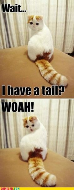 Whoahh puffy tail!