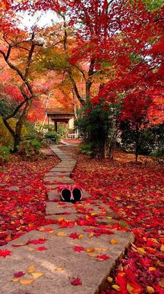 Japanese red, Outono em Kyoto, Japão. - by Cris Figueired♥