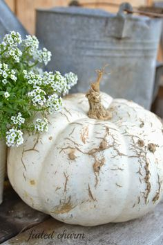 Pair white pumpkin with babies breath Glass Pumpkins, White Pumpkins, Fall Pumpkins, Halloween Pumpkins, Fall Halloween, White Pumpkin Decor, Autumn Decorating, Baby Shower Fall, Happy Fall Y'all