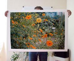 Orange Flowers Print 30x40 by debbiecarlos on Etsy