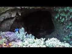 Enchanted Caves | Lares | Camuy | Puerto Rico | Your Tourism Desires