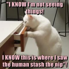 I KNOW I'm not seeing things!