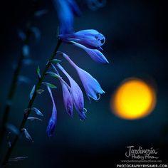 Flor en la oscuridad - http://jardineriaplantasyflores.com/fotos/flor-en-la-oscuridad/