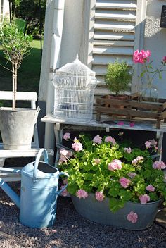 #shabby little #garden area