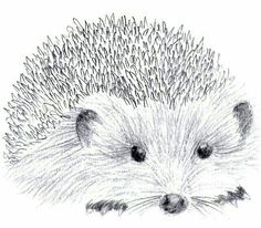 ~Such a lovely Hedgehog sketch~