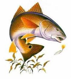 bull redfish clip art - Bing Images