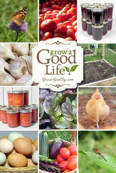 "Grow a Good Life is a homesteading blog about the journey to a more self-sufficient life. We believe in a simple, frugal, and sustainable lifestyle, and we are getting back to basics, growing a food garden, cooking from scratch, preserving the harvest, studying herbalism, and keeping a small flock of backyard chickens. We are sharing what we have learned to inspire everyone to Grow a Good Life. Visit <a href=""http://growagoodlife.com"" rel=""nofollow"" target=""_blank"">growagoodlife.com</a> to…"