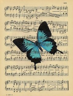 O pouso da borboleta