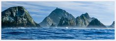 Farallon Islands off the coast of San Fran (for more cage diving)