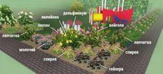 Клумбы непрерывного цветения – схемы с описанием цветов Creative Landscape, Silver Christmas Tree, Green Lawn, Bougainvillea, Garden Care, Flower Beds, Vegetable Garden, Garden Landscaping, Color Schemes