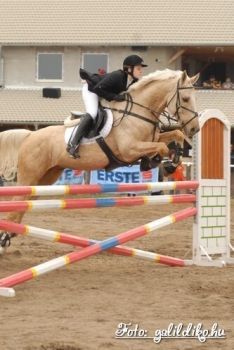 Hungarian Warmblood, Jumping and a warmblood. a match made in heaven!