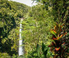 Akaka Falls on the Big Island of Hawaii | Travel Photo Discovery #AkakaFalls #Hawaii