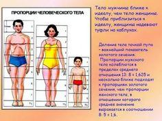 пропорции человеческого тела: 14 тыс изображений найдено в Яндекс.Картинках