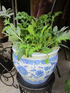 Lettuce mix is easy to grow in a pot from seed, and is beautiful too! Here's how... #LettuceInPots