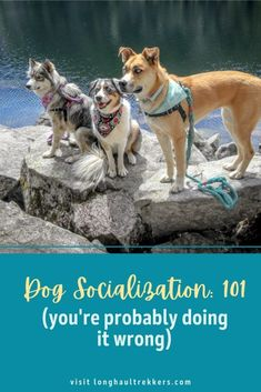 Socializing Dogs, Hiking Dogs, Dog Fighting, Happy Puppy, Training Your Puppy, Dog Care, Dog Friends, Dog Owners, Dog Mom
