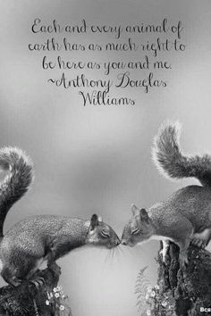 Each and every animal . . . | Anthony Douglas Williams