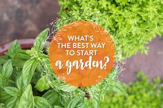 What's the Best Way to Start a Garden? http://qoo.ly/gmqbd #Gardening101 #PugetSound #WesternWA