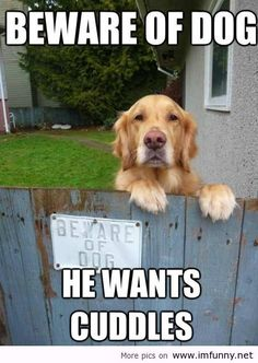 Behare dogs, he wants cuddles / Funny Pictures, Funny Quotes – Photos, Quotes, Images, Pics