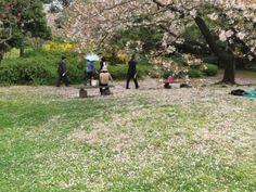 23:「大きな白うさぎが、花見をしているのに誰も気づいていないようだったわ。」@旧芝離宮恩賜庭園