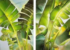Watercolor by Carol Carter.  The Grand Bananas watercolor.  60 x 80  diptych. 1999 - $4,800 each
