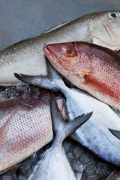Fish / Nicole Franzen