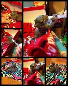 Raising a baby squirrel - adorable! #collagefriday