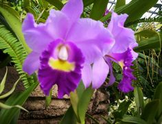 Beautiful Orchids | Blue Mystique Orchids Care | Beautiful Orchids Care
