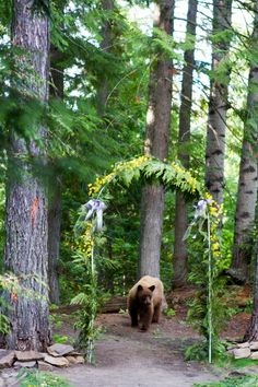 Mr Brown Bear came up to check out things after the Ceremony at Alpine Lodge just off the ski hill in Fernie BC. Lifestyle Photography, Wedding Photography, Alpine Lodge, Ski Hill, Brown Bear, Skiing, Mountain Weddings, Check, Plants