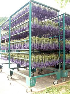 I would absolutely LOVE a lavender garden! Or better yet, to be a lavender farmer....ahhhh, a girl can dream ~