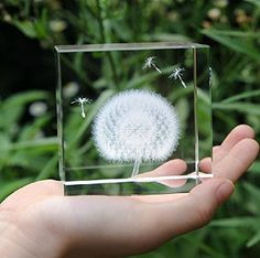 Vintage Natural White Dandelion Seed Glass Bauble Dry Flower Stud Earrings