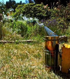 smoker.jpg EQUIPMENT LIST  FOR THOSE INTERESTED IN BECOMING BEE KEEPERS I HAVE CREATED A BOARD FOR BEGINNER BEEKEEPERS. PLEASE VISIT ...I PROMPTLY DELIVER WORTHY REQUEST FOR SPECIFIC INFORMATION AS I AM ABLE. NOT FOR LACK OF TRYING(:
