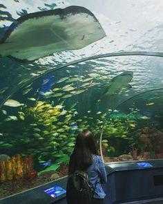 Uma das minhas atrações preferidas em Toronto ! O aquário é mágico e faz parte do CityPASS (tenho um post falando só dele), você pode…