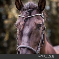 Black horse with MagicTack browband for horses Horses, Animals, Black, Animales, Animaux, Black People, Horse, Animal, Animais