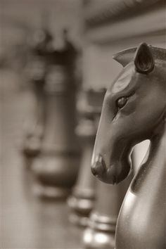 The noble horse--royal, confident, yet humble.