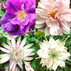 garden stalwarts - still flowering! www.mossandstone.co.uk