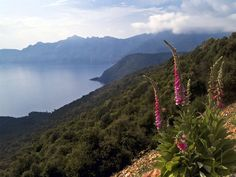 """Balagne, Corsica. Often forgotten the Med island of Corsica is part of France, and ambience much different to the Spanish """"party"""" islands. On the northwest coast of the island, the Balagne is a hilly wilderness nestled between the coast and the mountains that we gladly nicknamed """"Garden of Corsica"""". ©  Daniel Cremona - Flickr"""