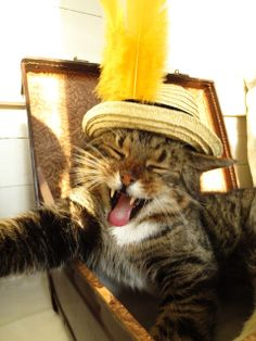 I love my cat...in is hat...