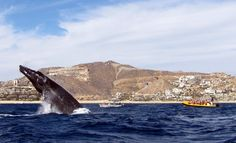 Whale watching in Cabo with Ocean Riders Mexico