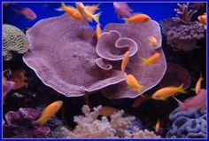 FRIENDS FROM THE HEART-ALBUM D :: sealife-coral.jpg