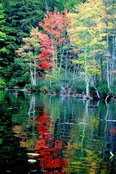 ✮ Wavy Red in the Adirondaks, NY